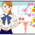 PMSの基礎知識(その1)- 月経のメカニズム